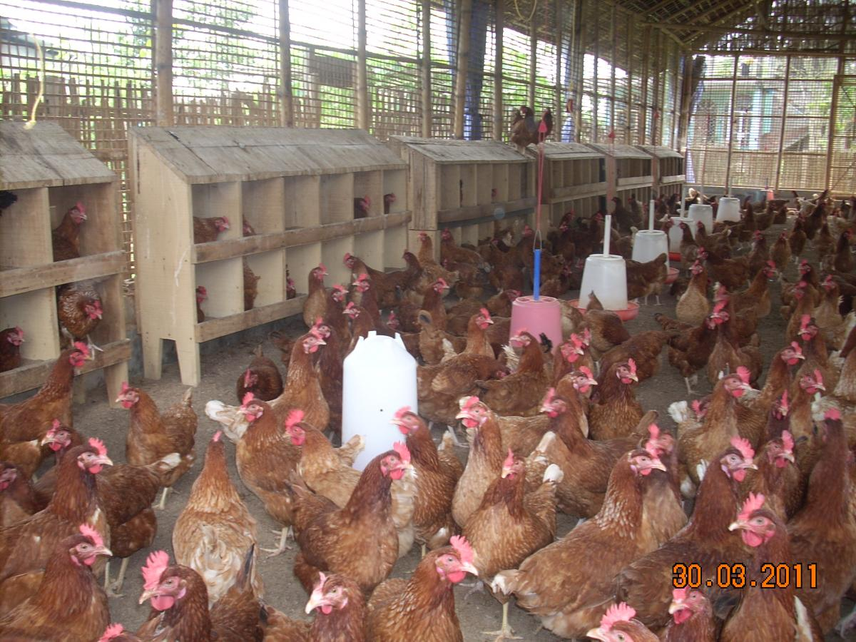 Farmers' Corner | Assam Live Stock and Poultry Corporation